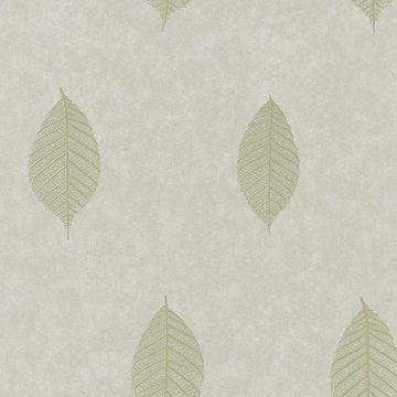 Malabar Sage Leaf