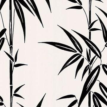 Saharan White Bamboo Stalk