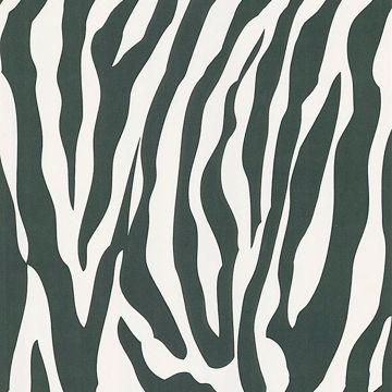 Congo White Zebra