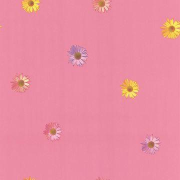 Daisy Pink Gerber Daisies