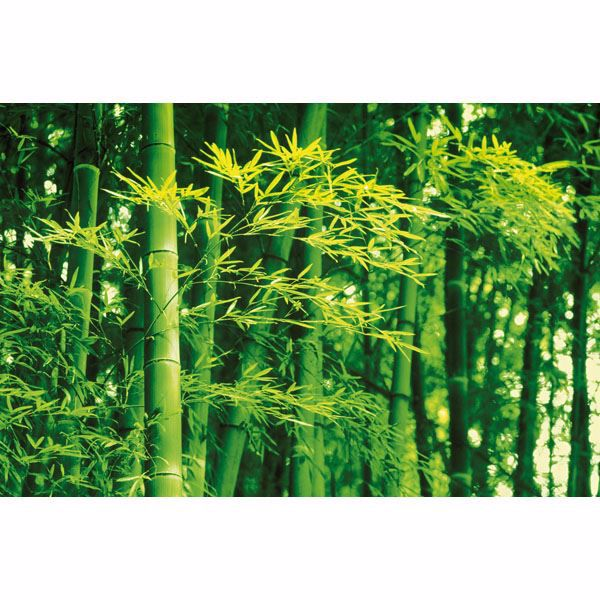 Bamboo In Spring