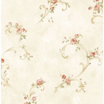 Cream Tearose Acanthus