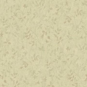 Vinca Olive Trailing Leaves