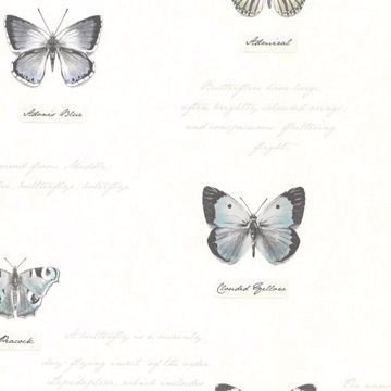 Admiral Black Butterflies and Script