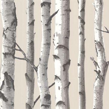 Picture of Tuxbury Beige Birch Tree Wallpaper