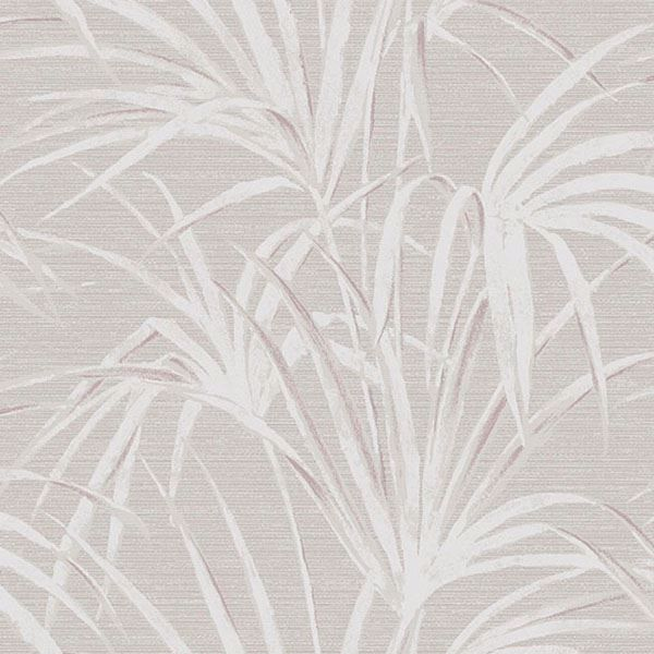 Picture of Song Grey  Fountain Palm