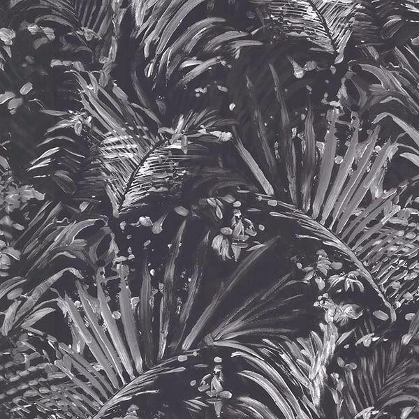 Picture of Adopsis Black Botanical