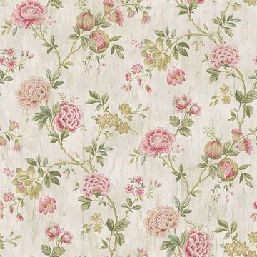 Picture of Chrysanthemum Pink Jacobean