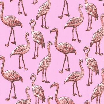 Picture of Flamingo Pink Graphic