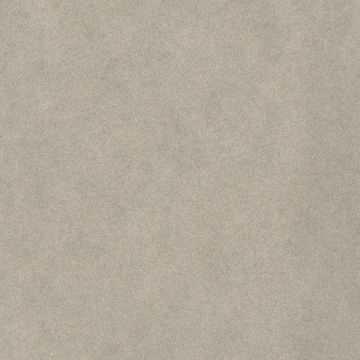 Picture of Darla Taupe Shimmer