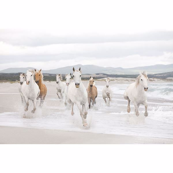 Picture of Komar White Horses Wall Mural