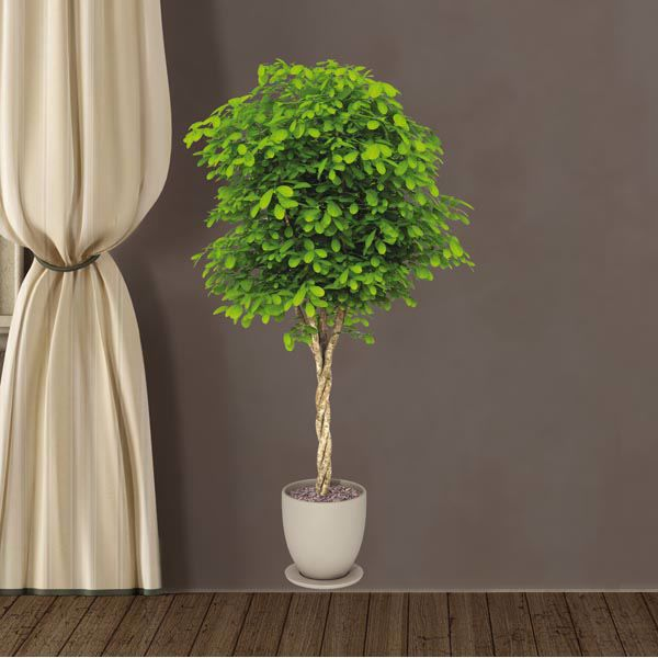 Picture of Plant Wall Decals