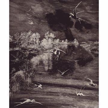 Picture of Hirundo Black Wall Mural