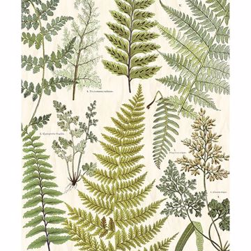 Picture of Herbarium Green Wall Mural