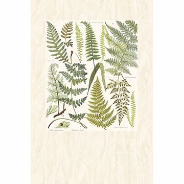 Picture of Athyrium Wall Mural