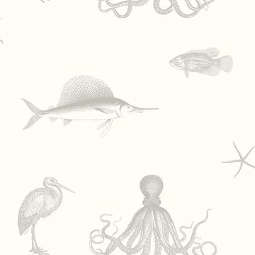 Picture of Oceania Grey Sea Creature Wallpaper