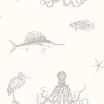 Picture of Oceania Grey Sea Creature Wallpaper