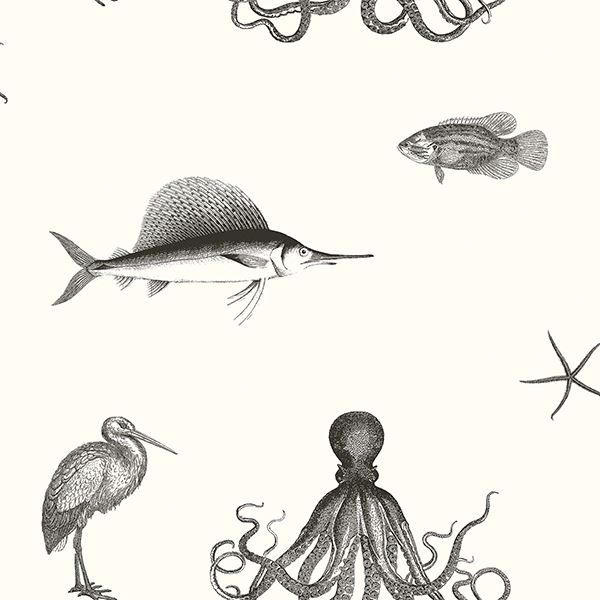 Picture of Oceania Black Sea Creature Wallpaper