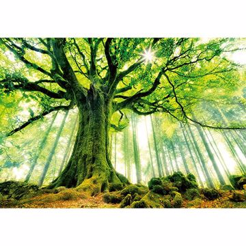 Picture of Ponthus' Beech Wall Mural