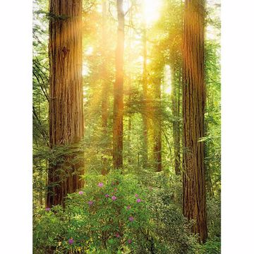 Picture of Redwood Wall Mural