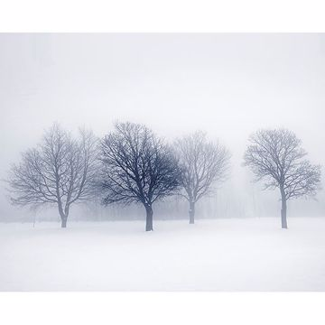 Picture of Winter Trees Wall Mural
