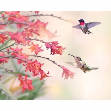 Picture of Humming Birds Wall Mural