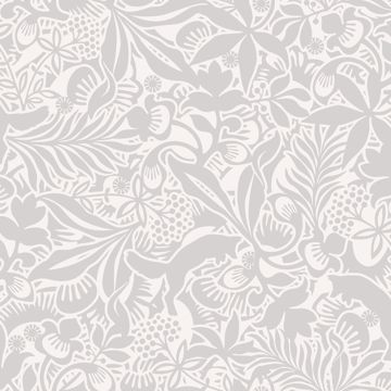 Picture of Lummig Grey Fox Wallpaper