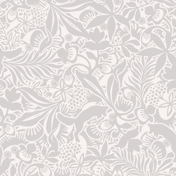 Picture of Lummig Grey Fox Wallpaper