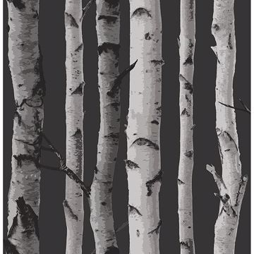 Picture of Distinctive Black Birch Tree Wallpaper