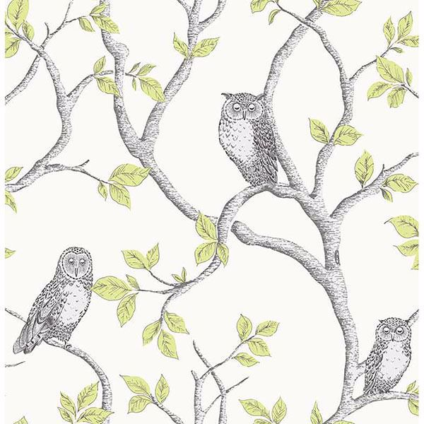 Picture of Linden Green Owl Wallpaper