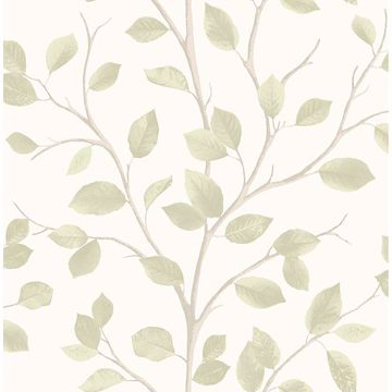 Picture of Beech Natural Leaf Wallpaper