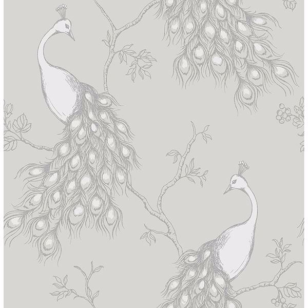 Picture of Phasia Grey Peacock Wallpaper