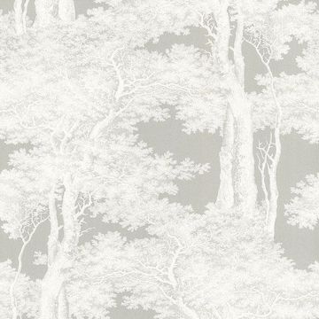 Picture of Scout Grey Forest Wallpaper