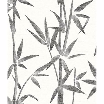 Picture of Catasetum Black Bamboo Wallpaper