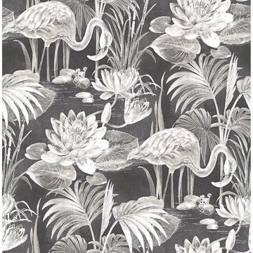 Picture of Miltonia Black Flamingo Wallpaper