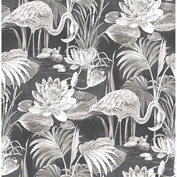 Picture of Miltonia Black Flamingo Wallpaper