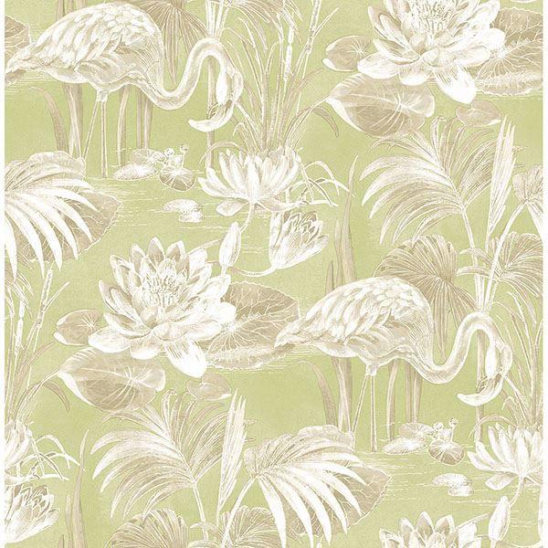 Picture of Miltonia Green Flamingo Wallpaper