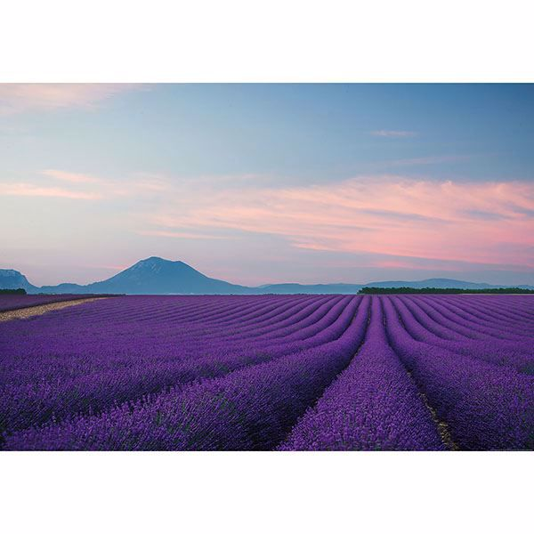 Picture of Provence France Wall Mural