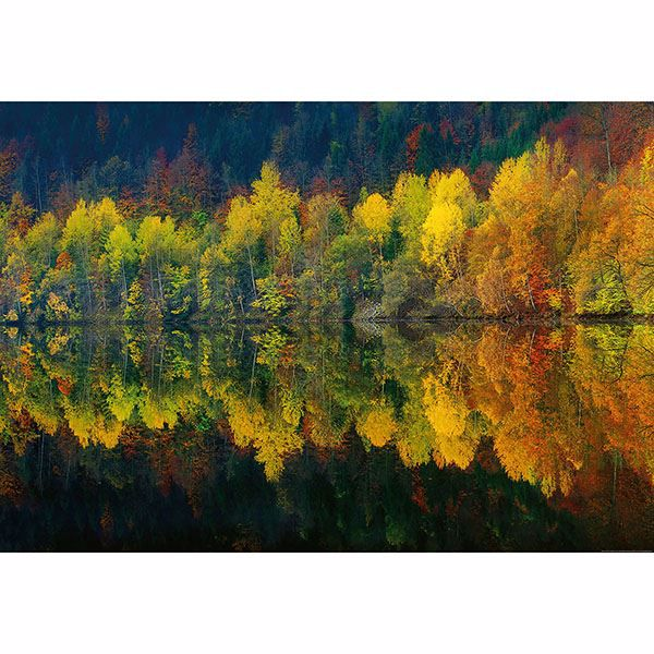 Picture of Autumn Forest Lake Wall Mural