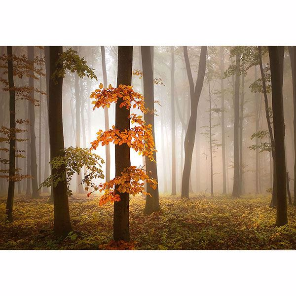 Picture of Foggy Autumn Forest Wall Mural