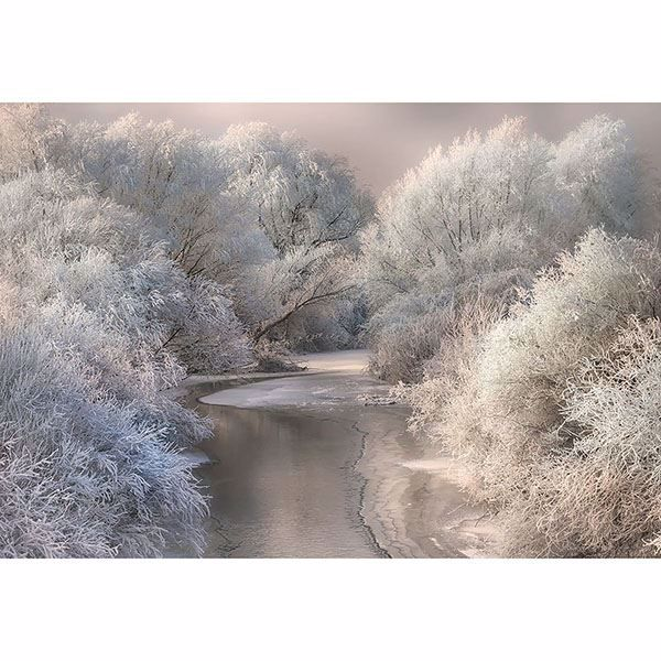 Picture of Frozen Forest Wall Mural