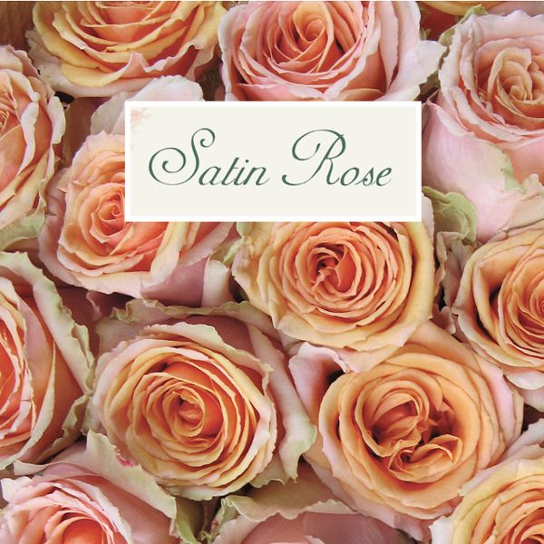 Picture for category Satin Rose