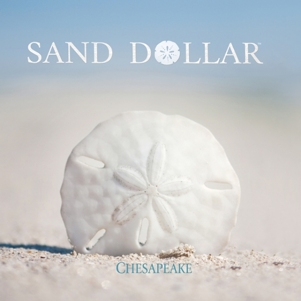 Picture for category Sand Dollar
