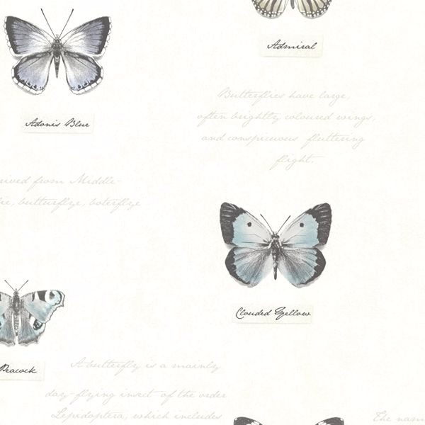 Picture for category Butterflies