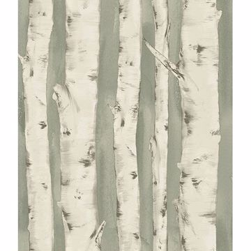 Picture of Pioneer Sage Birch Tree Wallpaper