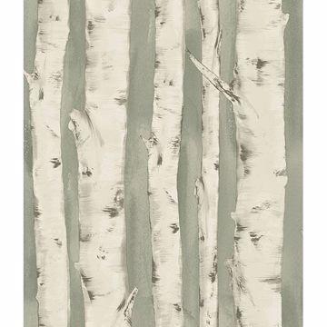 Picture of Pioneer Sage Birch Tree Wallpaper