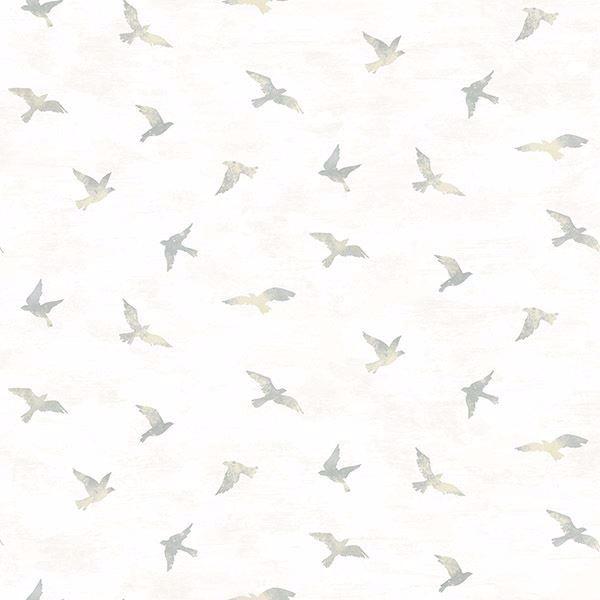 Picture of Soar Grey Bird Wallpaper