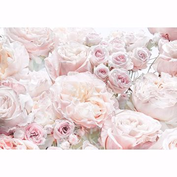 Picture of Spring Roses Wall Mural