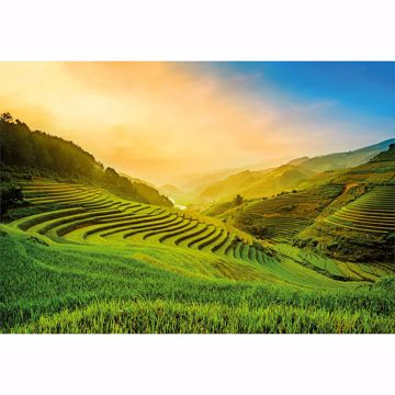 Picture of Terraced Rice Field In Vietnam Non Woven Wall Mural