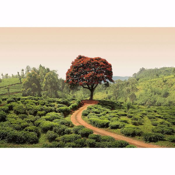 Picture of Red Tree And Hills In Sri Lanka Non Woven Wall Mural